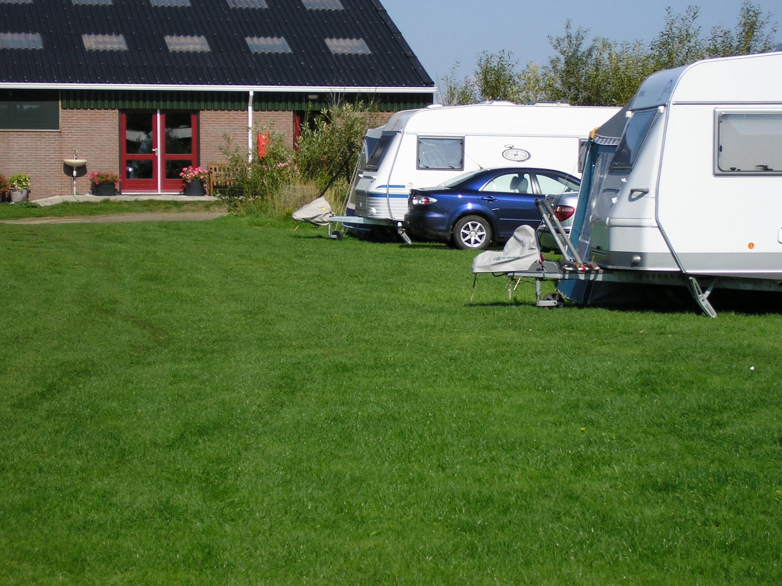 Campen zwischen Kühen und Schafen auf Camping in De Koog