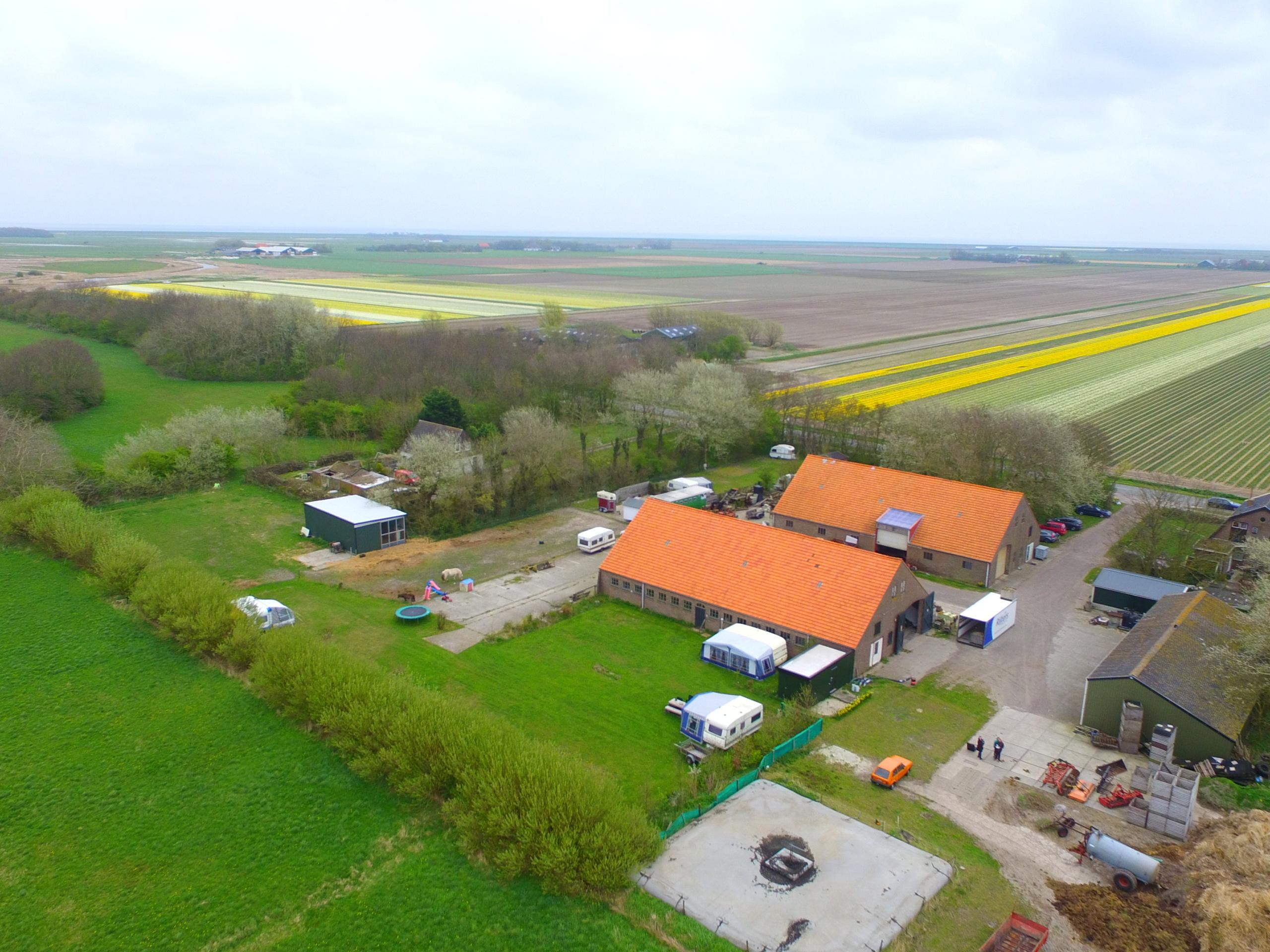 Bloembollen boerderij in polder Eierland, vlakbij de duinen met uitzicht op de ondergaande zon