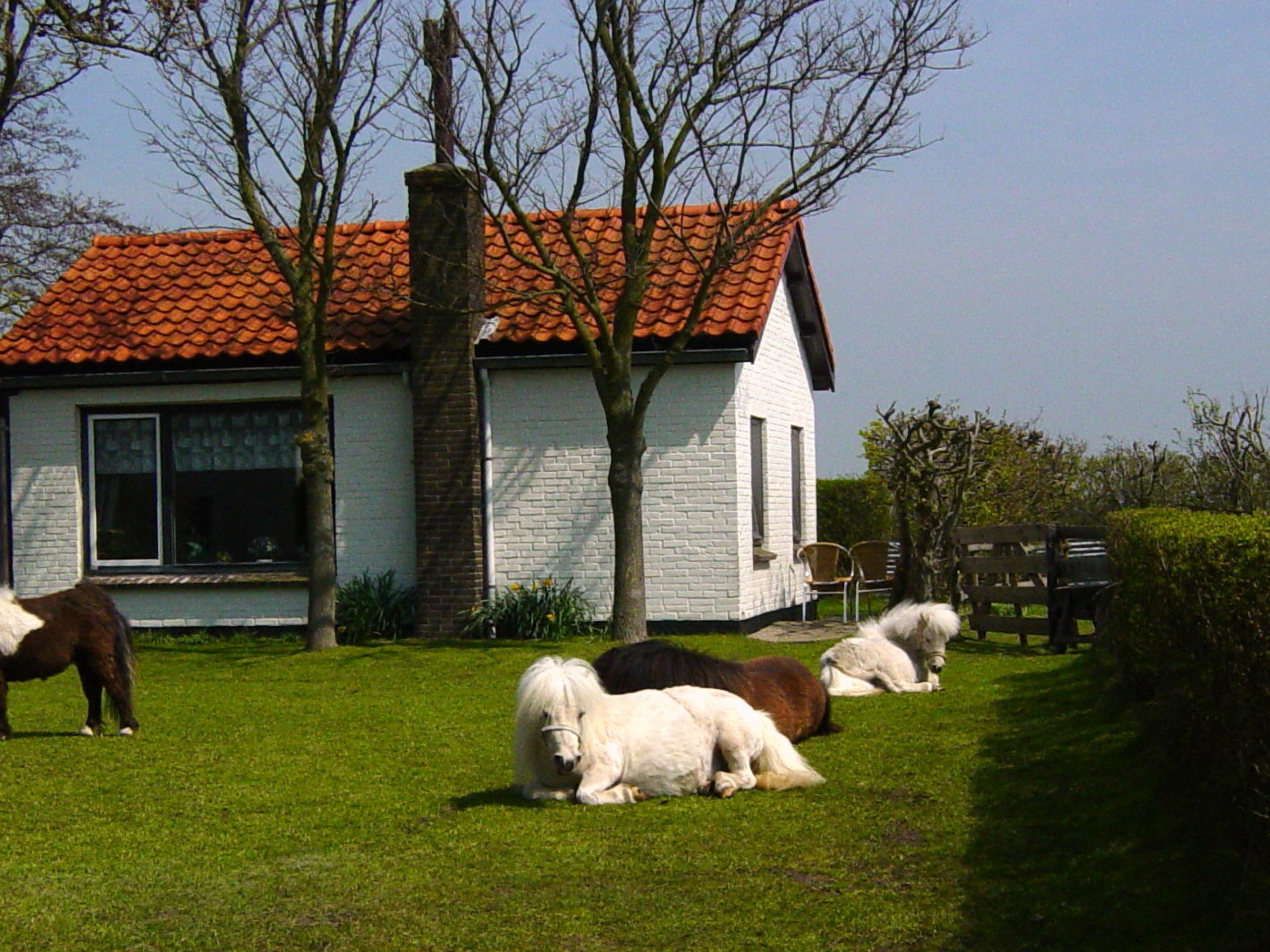 Ontspannen in een knus en rustig vakantiehuisje met eigen tuin tussen de Texelse weiden en dieren